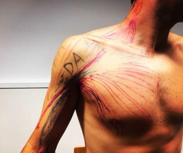 anatomia_pectoral